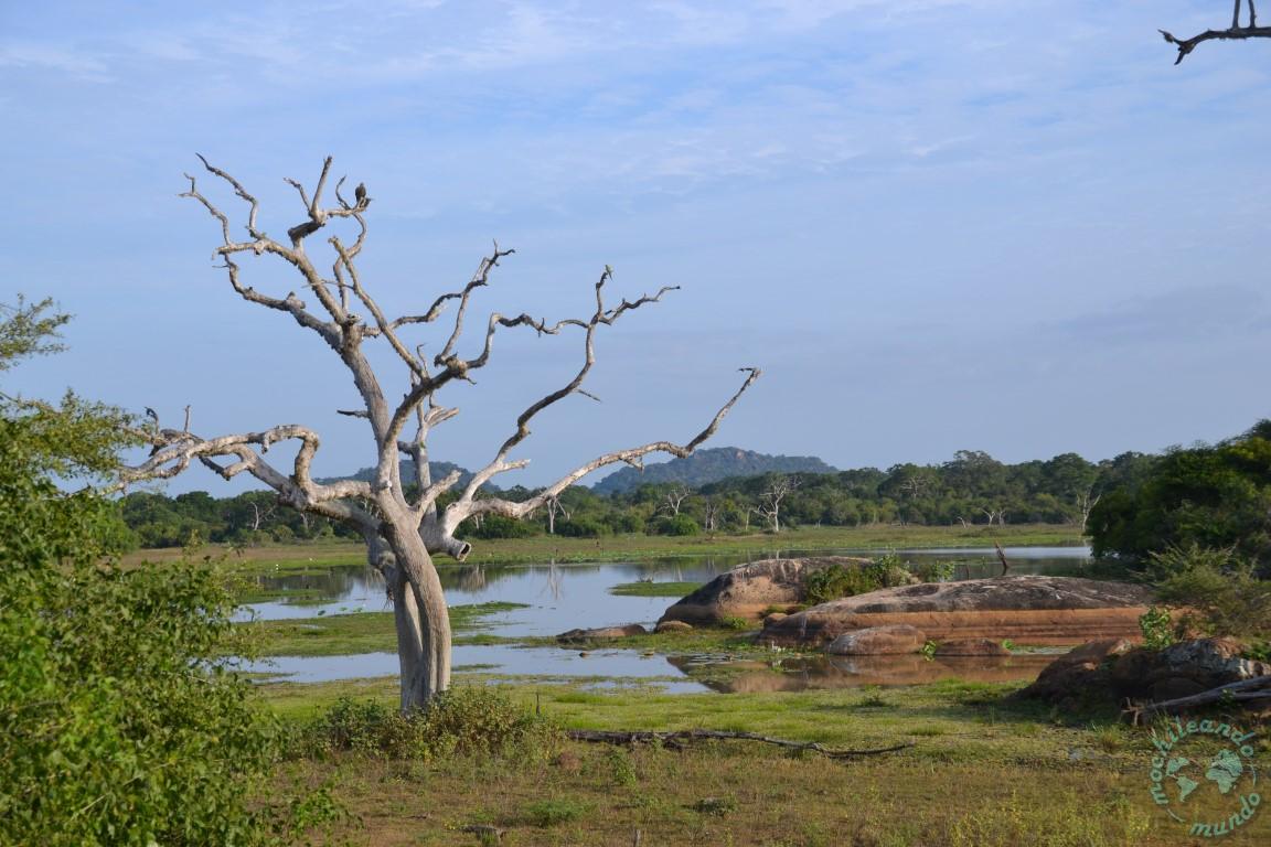 Safari Parque Nacional de Yala