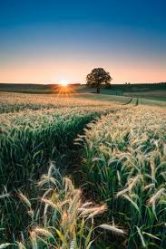 تحضير درس ارضنا الجميلة