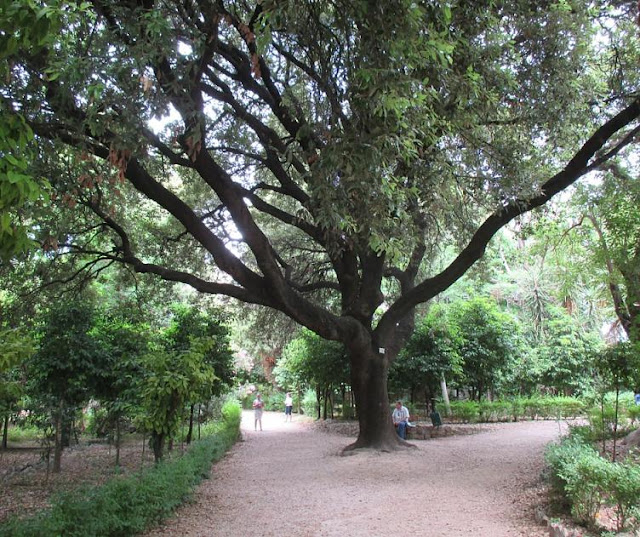 Athens' National Garden