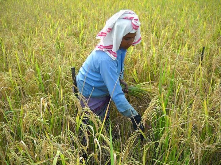 সেউজী ধৰণী seuji dharani an essay on role of women in  an essay on role of women in agriculture