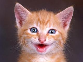 18aaaa4df Curiosos e Engraçados: Gatos Sorrindo