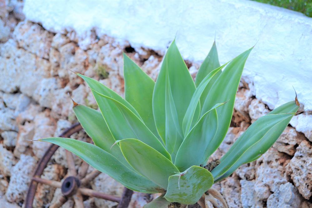 Los beneficios silenciosos de las plantas, vamos descubrir que no solo decoran, las plantas nos ayudan de manera saludable y emocional.
