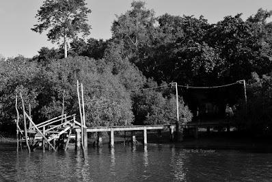 Hutan Mangrove Blok Bedul, Banyuwangi