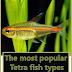 The most popular Tetra fish types