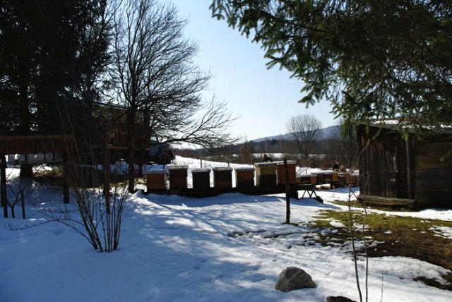 bee farm in winter with snow cover