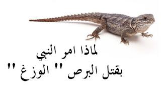 حيوانات امرنا الاسلام بقتلها