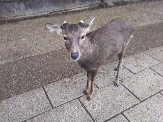 仕事で大阪に行ったので、奈良にも行って来た。