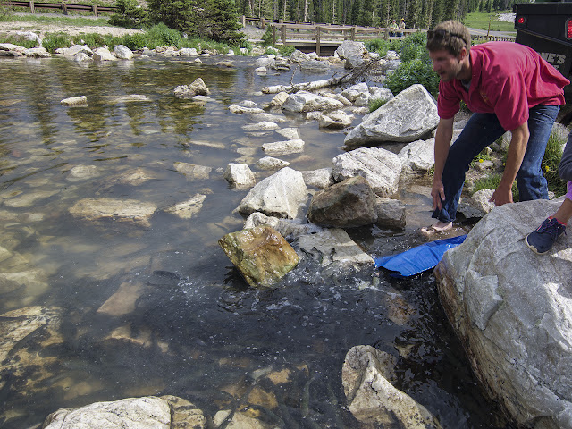 Stocking fish in Lake Marie of the Medicine Bow National Forest, Snowy Range, Wyoming