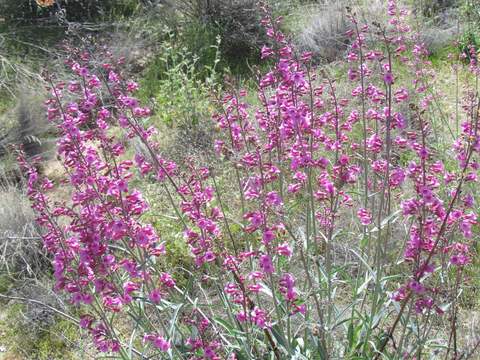 Hardts On The Highway Desert Flowers