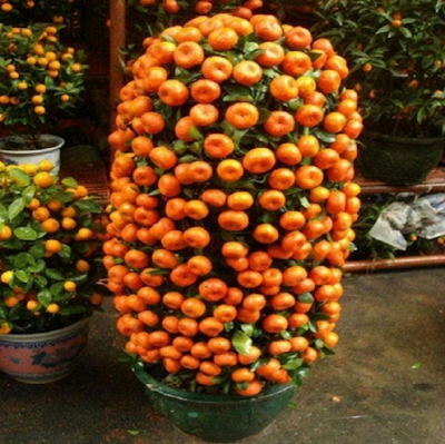 aliexpress купить семена
