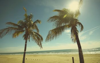 Wallpaper: Sunny, ocean breeze, palm trees