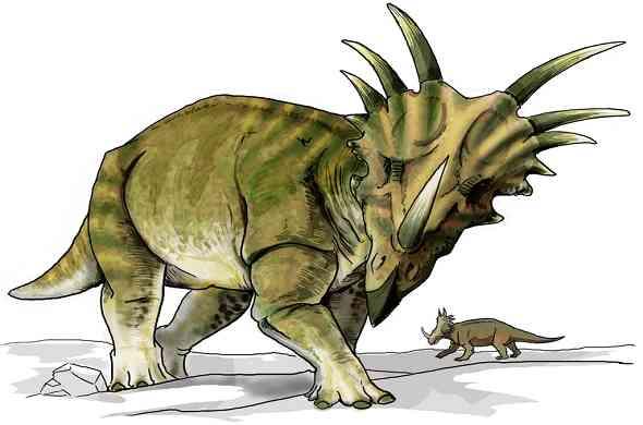 styracosaurus-dinosaur-ستايراكاسوراس-ديناصور