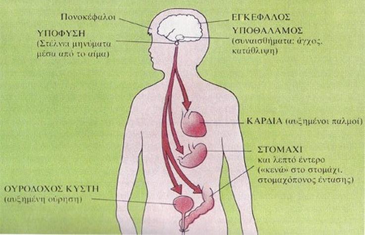 Αλεξανδρούπολη: Βιωματικό σεμινάριο «Άγχος και Ψυχοσωματική. Τρόποι αντιμετώπισης του Άγχους»