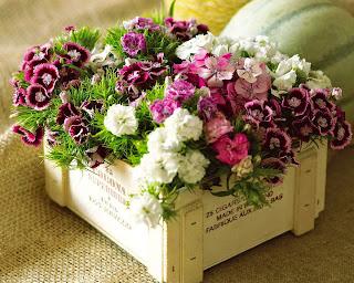 regalar flores, flores frescas