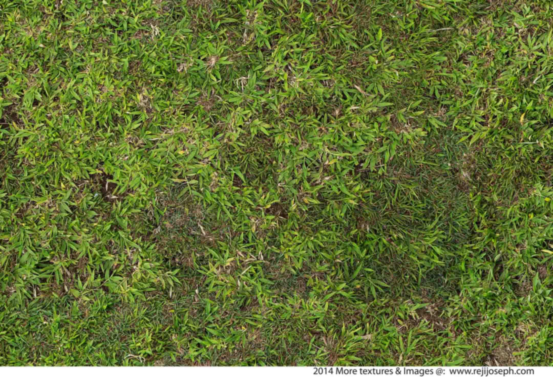 Grass texture 00002