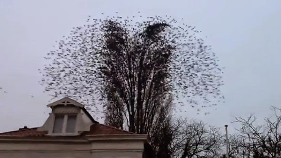 Birds Fly Simultaneously Away