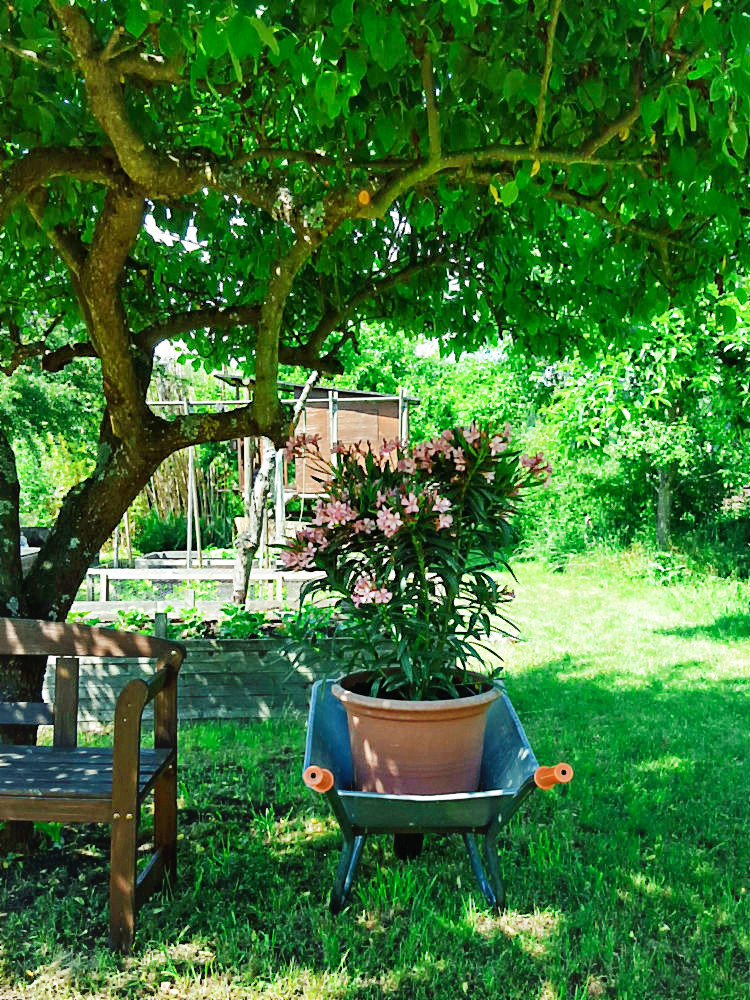 Oleander im großen Garten | Arthurs Tochter kocht. Der Blog für food, wine, travel & love von Astrid Paul