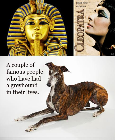 famous people and their greyhounds