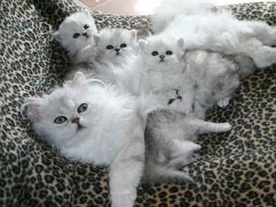 kucing comel, kittens, cute kitten, anak kucing comel