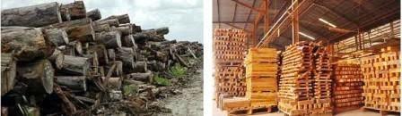 hasil kayu