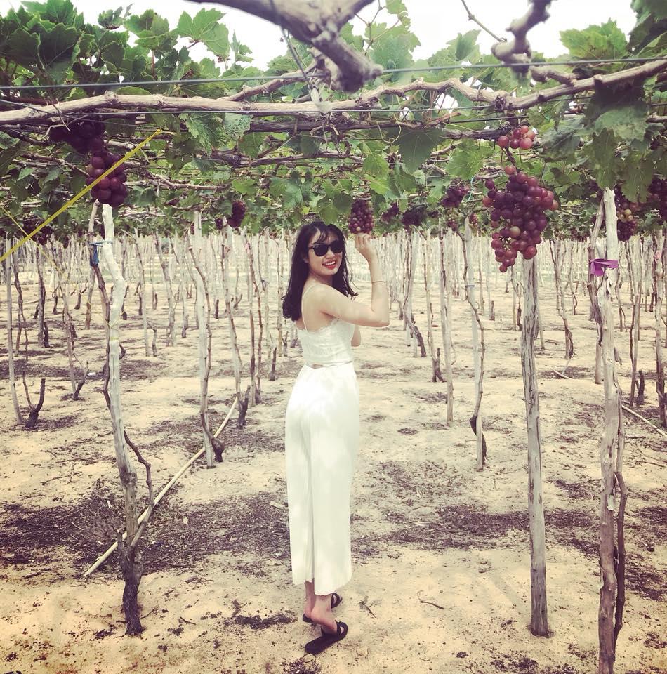 Vườn nho ở Ninh Thuận
