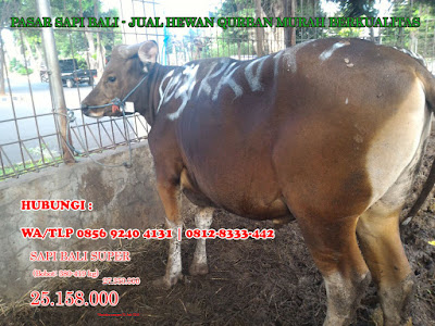 jual hewan qurban online, jual hewan qurban murah, jual hewan qurban Jakarta