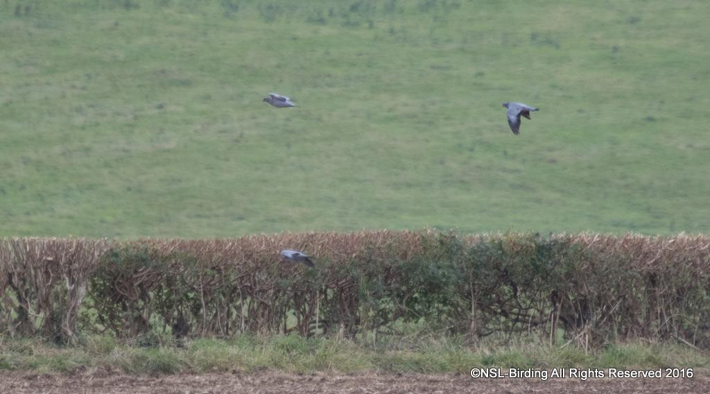 Newton St Loe Birding A Flocking Good Walk