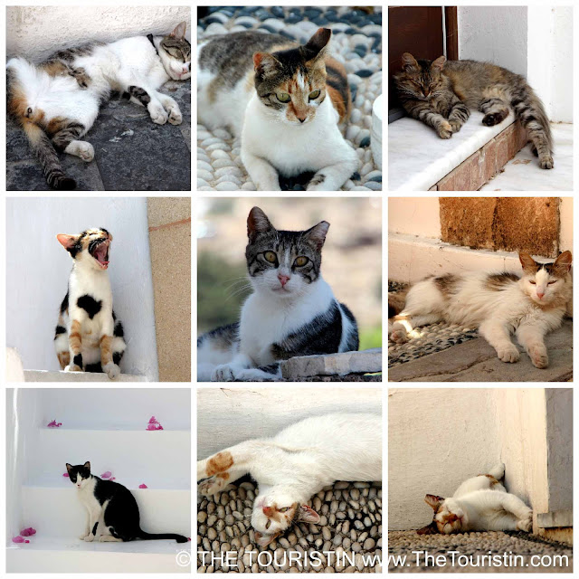 Cats in nine different positions, on the back, on belly, yawning, sleeping..