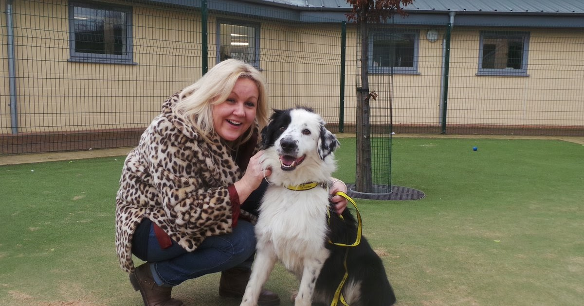 Dogs For Rehoming At Epping Forest Pet Rescue Centre