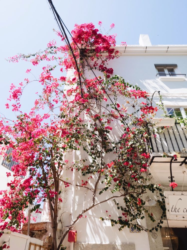 beautiful bougainvilleas everywhere in marbella spain guide | Coco Kelley