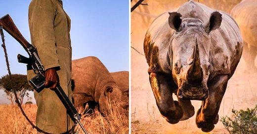 Cazar cazadores, la forma de proteger rinocerontes en India