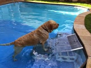 caes na piscina