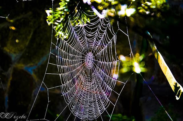 Паяжината-The-web