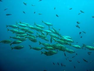 Kumpulan Kosakata Nama-nama Ikan Dalam Bahasa Inggris, Disertai Contoh Kalimatnya