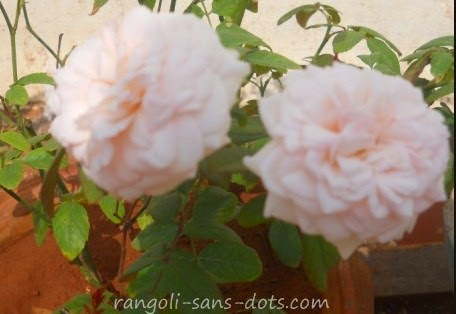 flower-2210a.jpg