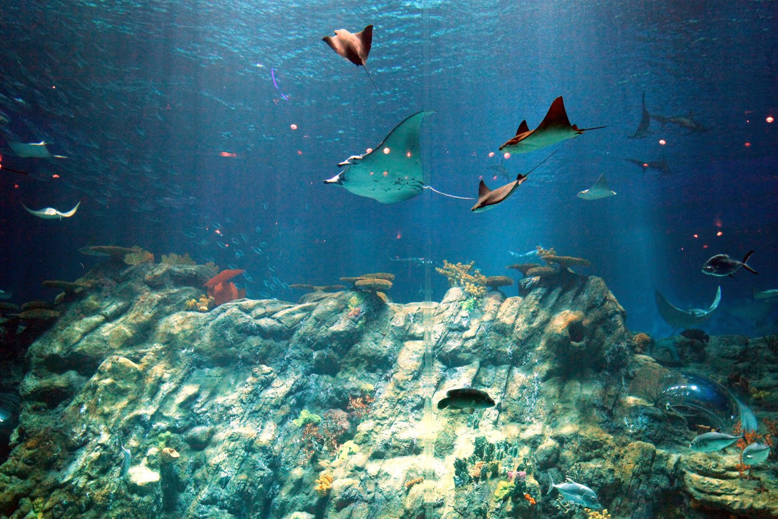 Rich Underwater Experience at Ocean Park, Hong Kong