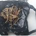 Elemento é detido com porção de maconha na rua da Celpe, em Belo Jardim, PE