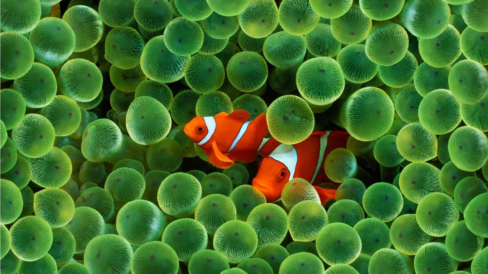Unduh 105 Wallpaper Pemandangan Ikan Gambar HD Terbaik