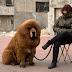 ΑΠΟ ΤΑ ΣΑΛΟΝΙΑ ΣΤΟΝ ΔΡΟΜΟ! Ποιοι πανάκριβοι σκύλοι εγκαταλείπονται...