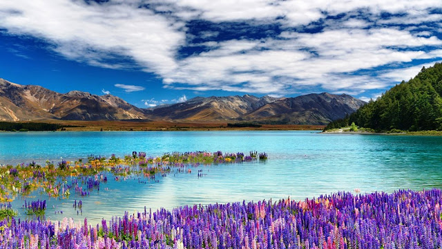 cheap flights to New Zealand
