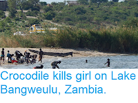 https://sciencythoughts.blogspot.com/2018/12/crocodile-kills-girl-on-lake-bangweulu.html