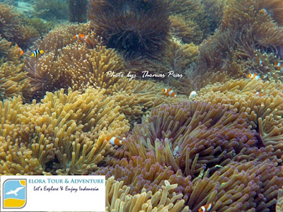 spot replanting terumbu karang
