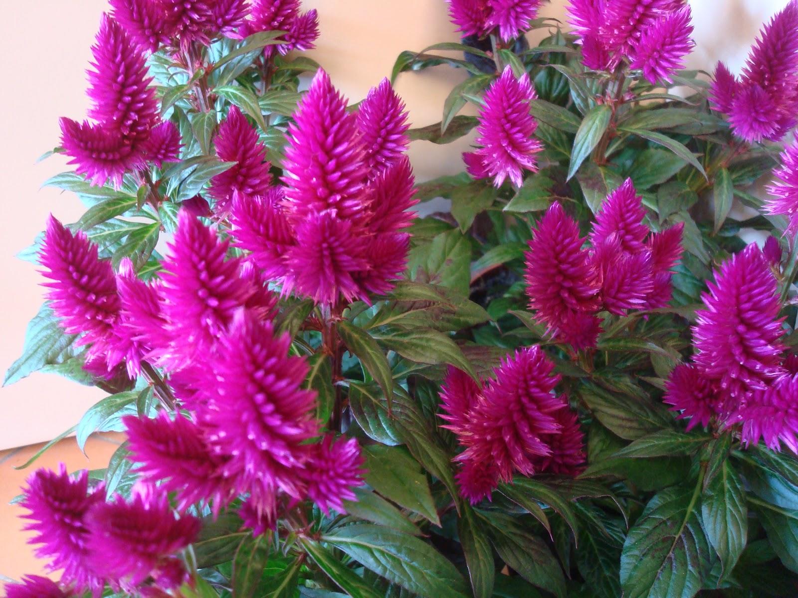 Plantes D Exterieur Qui Ne Gelent Pas Choisir Les Plantes Pour Son