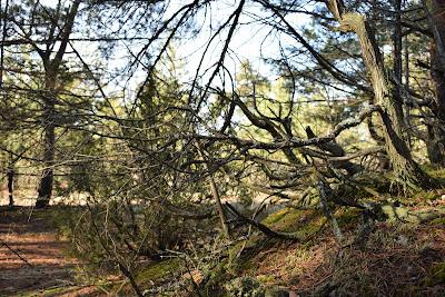 Природа Глусского района