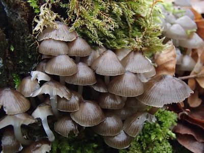 grzyby 2018, grzyby w styczniu, grzyby w Lasku Wolskim, grzyby w zoo, grzyby zimowe