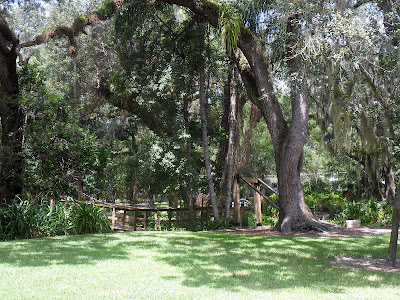 Park, Orlando, Florida, Nature, Trees