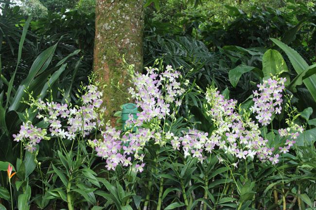 Orquideas blancas y violetas