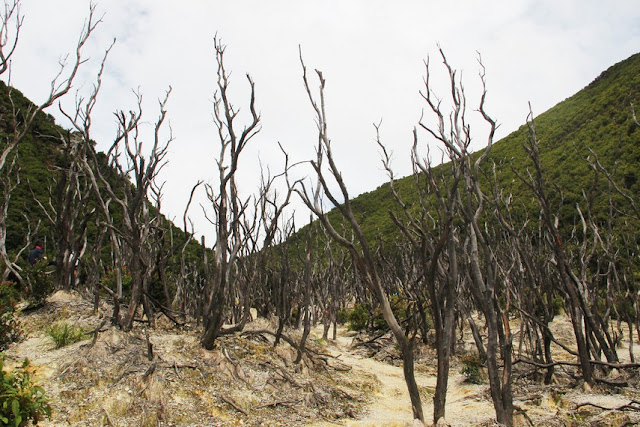 Dead Forest, Exotic Area in Mount Papandayan