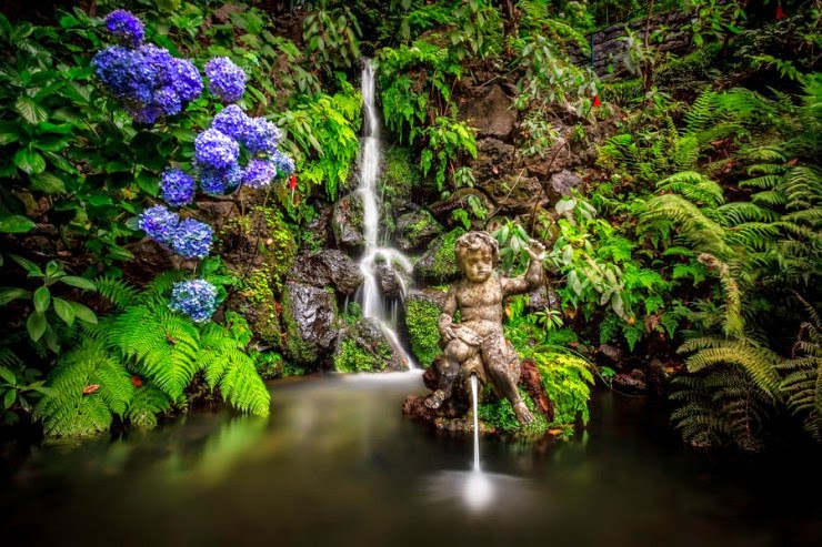 The Most Beautiful Botanical Gardens In Madeira