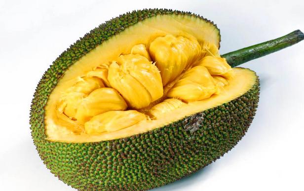 gambar mewarnai buah nangka